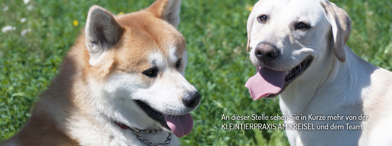 Praxis, Team, Kleintierpraxis, Tierarztpraxis Wackersdorf, Dr. med. vet. Yvonne Friedl